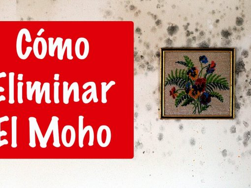 6 Tips para eliminar las manchas de moho de la pared - be clean